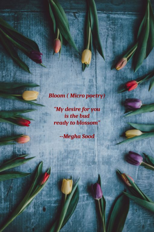 Bloom_MP.jpg
