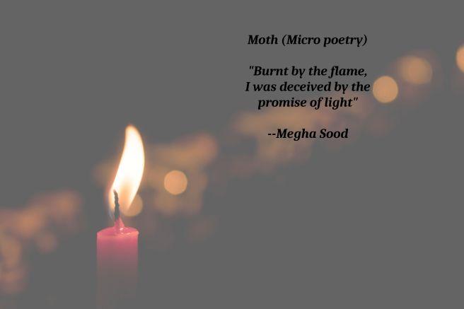 Moth_MP